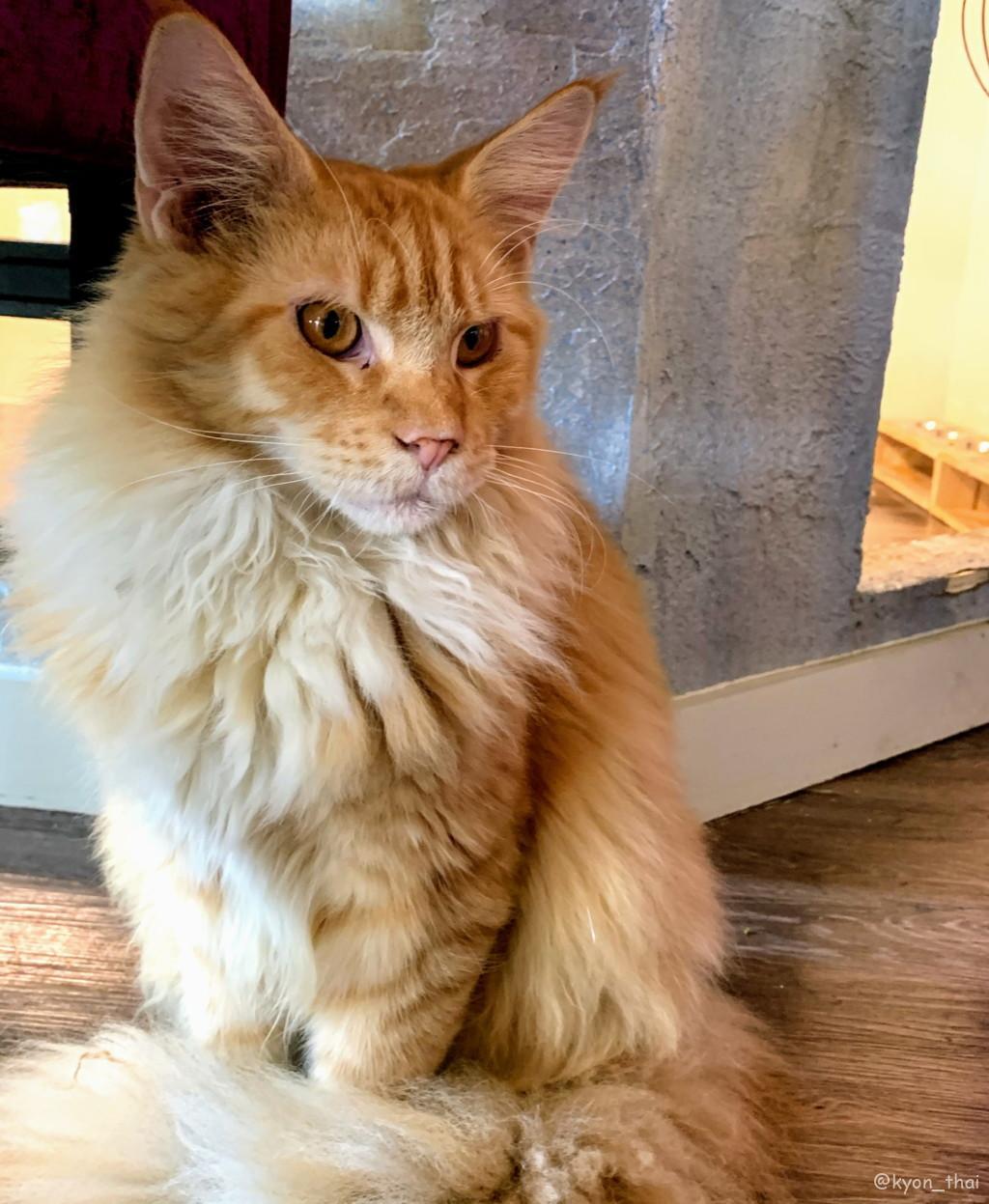 レインヒルの猫カフェ